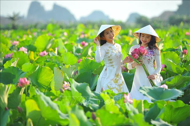 Thơ mộng sen hồng vùng đất cố đô Ninh Bình